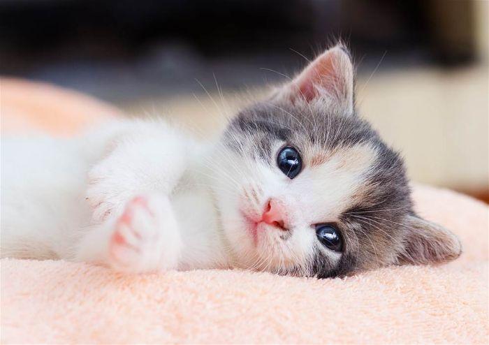 cách chăm sóc mèo con