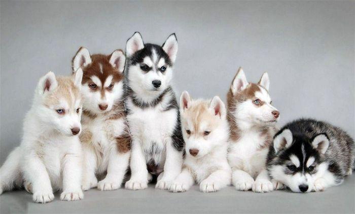 Kinh nghiệm chọn giống chó con