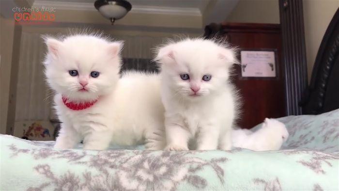 Mua mèo con lúc mấy tháng tuổi?